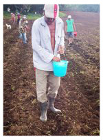 web El                                                         Porvenir group                                                         planting cotton                                                         man with bucket                                                         2
