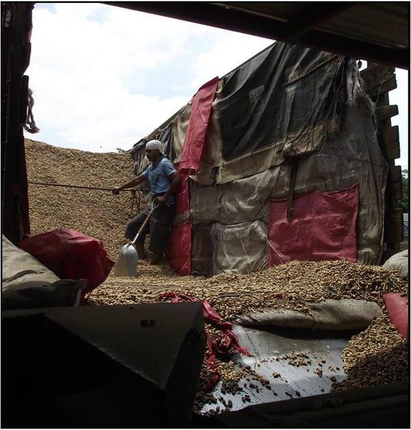 unloading                                                 organic peanuts